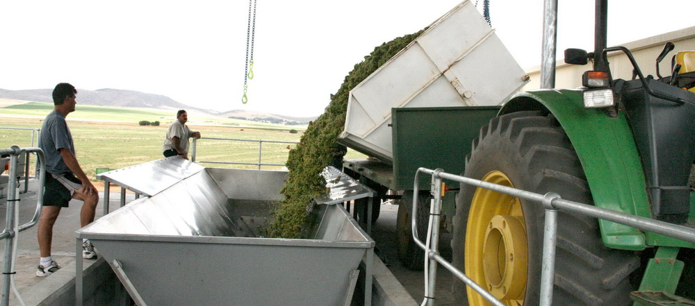 Grape Offloading Bin