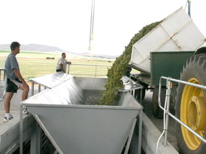 Wine Industy Conveying Sytems